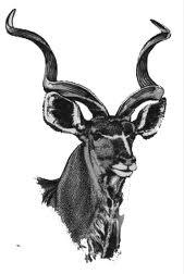 kudu 3