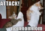 funny-pictures-kittens-attack-feet